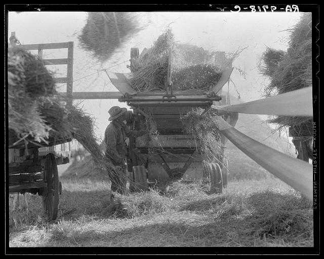 The threshing of oats. Clayton, Indiana, south of Indianapolis