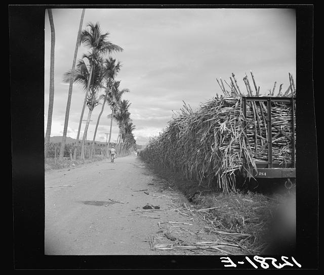 Train of flag cars loaded with sugar cane. On a sugar plantation near Ponce, Puerto Rico