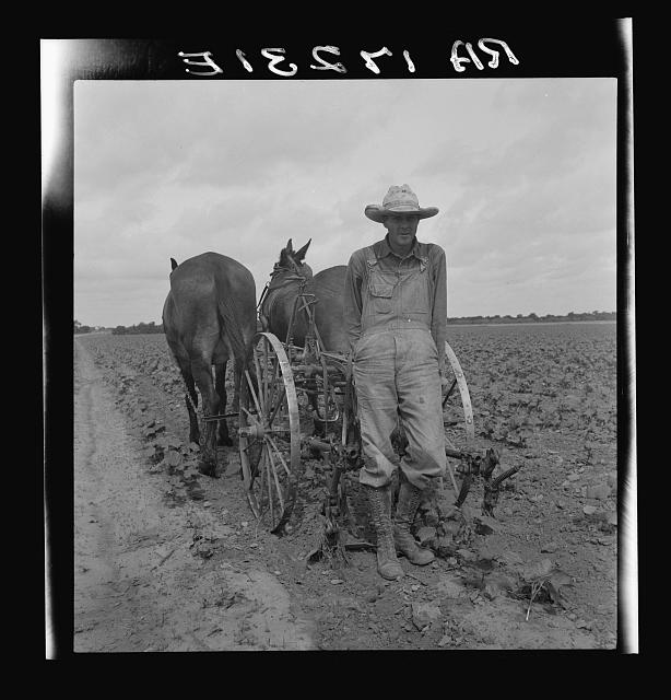 Ex-tenant farmer, now a day laborer on large cotton farm near Corsicana, Texas