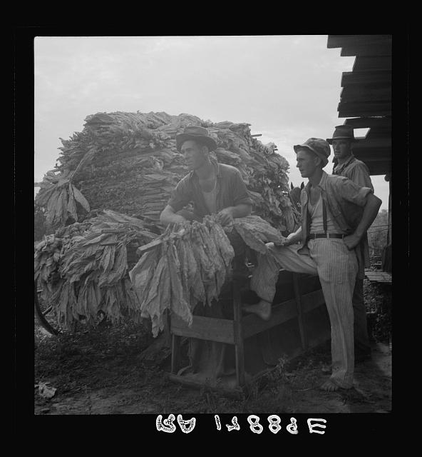 Loading cured tobacco for market. Georgia