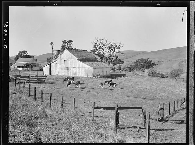 Small farm of California. Contra Costa County