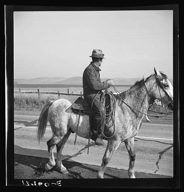 San Luis Obispo County, California. Cowboy coming in from the hills