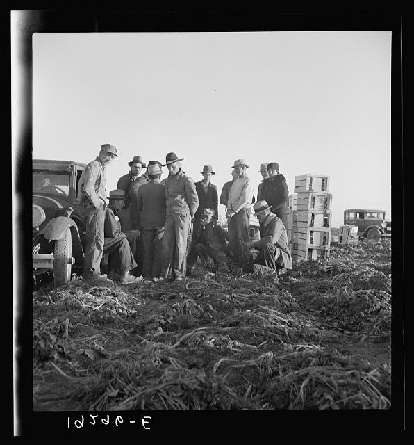 Migratory field workers at 5 a.m. waiting in the carrot field to hold a place to work, which starts at 8 a.m.