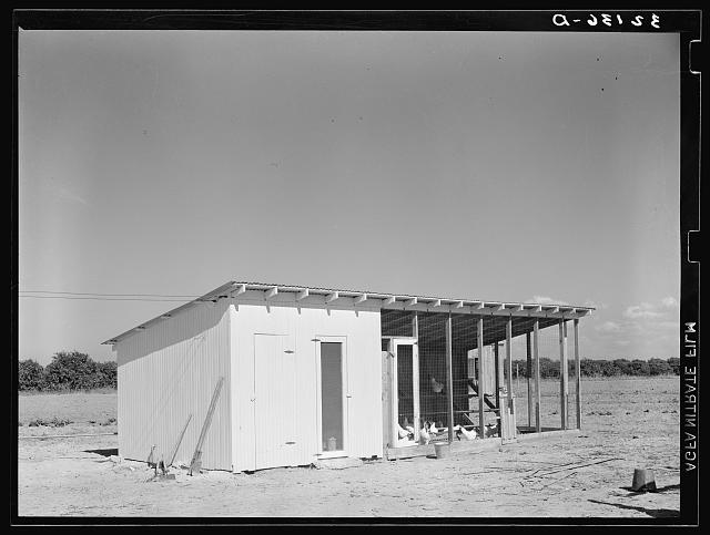 Chicken house of tenant purchase client. Hidalgo County, Texas