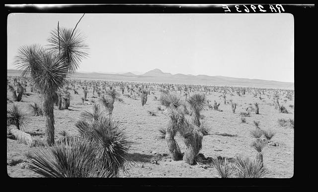 Type of land on project at Las Cruces, New Mexico. Note large yuccas