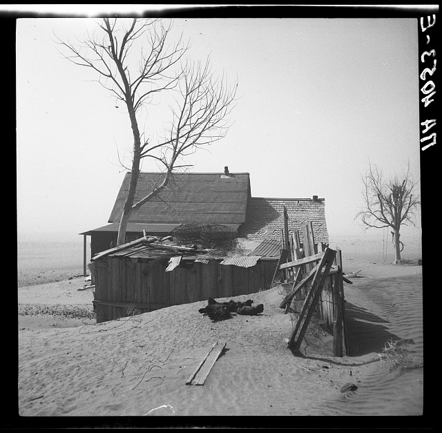 Chickens take shelter from sand. Cimarron County, Oklahoma
