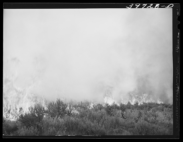 Detail of grass fire. Boise County, Idaho