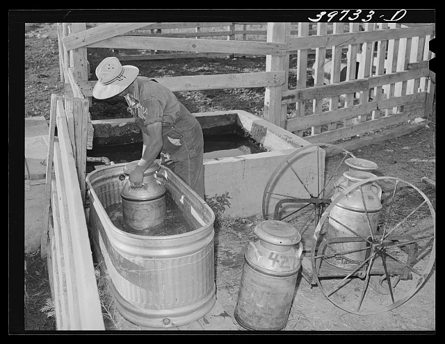 Member of the Dairymen's Cooperative Creamery, cooling fresh milk in water trough on his farm. Caldwell, Canyon County, Idaho