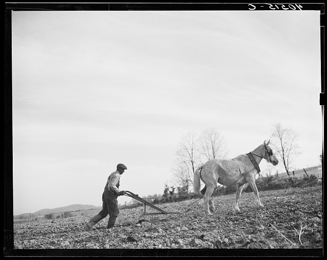 Farmer plowing his field of four acres. Near Washington, Virginia