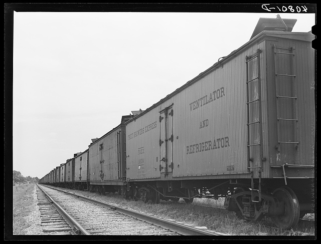 Freight cars at Camden, North Carolina, grading station. All along the line are potatoes being loaded