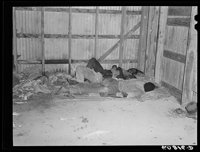 Sleeping quarters of migratory agricultural workers consists of potato sacks on the floor of the warehouse. Belcross, North Carolina