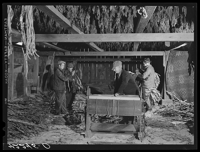 General view of stripping and wrapping operations in the tobacco barn of Mr. Robert J. Hawthorne, a tobacco farmer near Hazardville, Connecticut