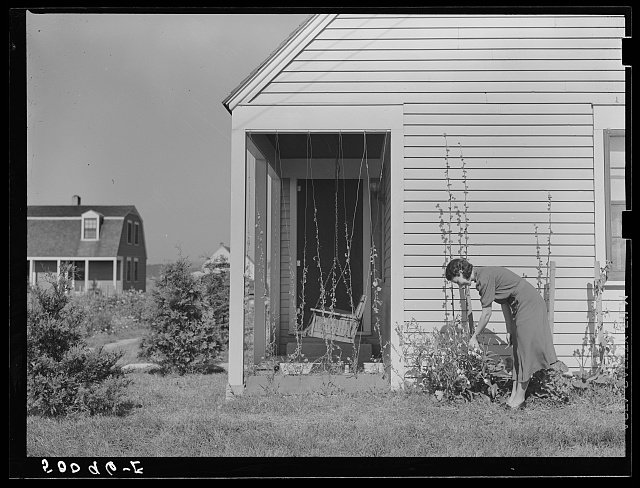 Homesteader picking flowers. Tygart Valley, West Virginia