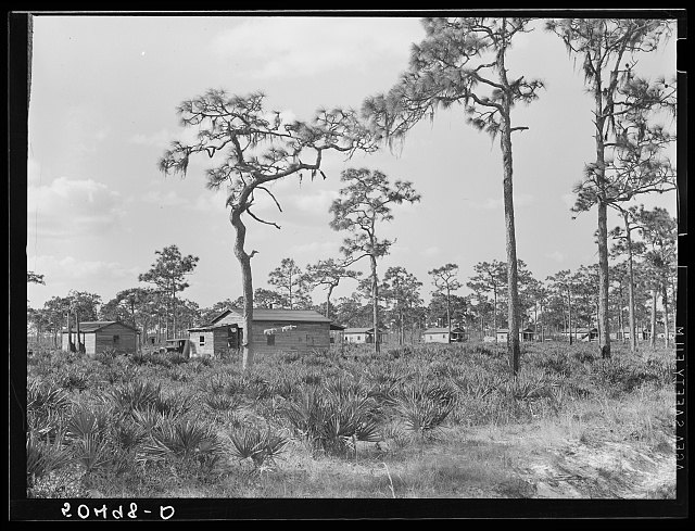 Turpentine camp. North Florida