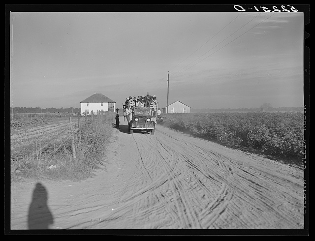 Negro day laborers coming in trucks from the fields after cotton picking to be paid off at plantation store. Mileston, Mississippi Delta. They are being brought in from nearby towns daily during the peak of the season. Mississippi