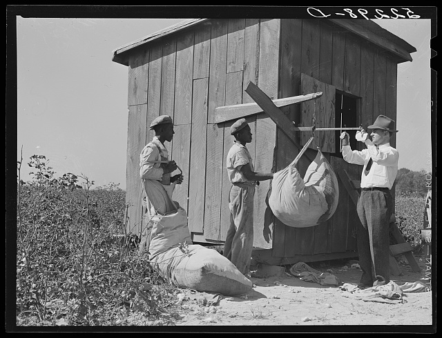 Mr. Jones, one of the owners of Marcella Plantation, checks up on the weighing of cotton. Mileston, Mississippi