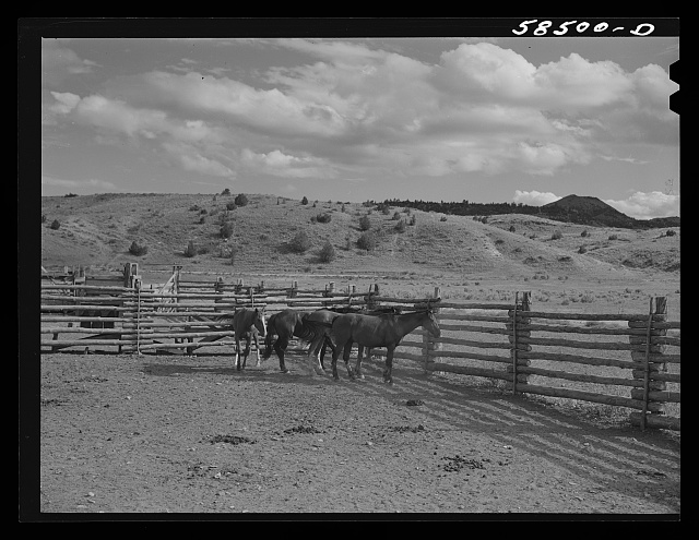 Horses in the corral. Quarter Circle U, Brewster-Arnold Ranch Company. Birney, Montana