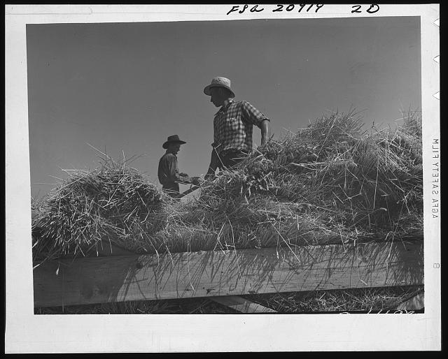 Threshing, midsummer noon. Five miles west of Malin. Klamath County, Oregon