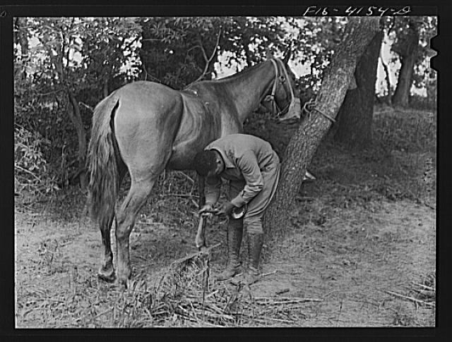 Fort Riley, Kansas. Shoeing a horse while in bivouac during a field problem of the cavalry