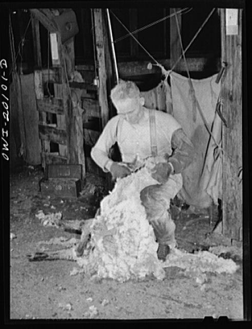 Emporia, Kansas. Shearing sheep at the Emporia stockyards. There are ninety sheep pens at these stockyards and forty thousand sheep were on hand on March fourteenth