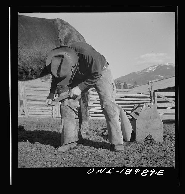 Moreno Valley, Colfax County, New Mexico. William Heck shoeing a horse