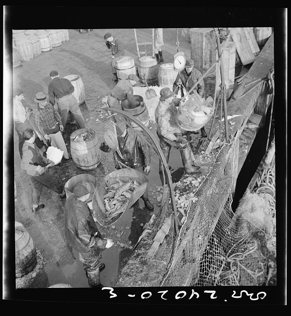 New York, New York. Dock stevedores at the Fulton fish market sending up baskets of fish from the holds of the boats to the docks where it is bought, stored in barrels and packed in ice for delivery to wholesalers