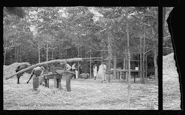 [Untitled photo, possibly related to: Fuquay Springs, North Carolina. Pressing sorghum cane]