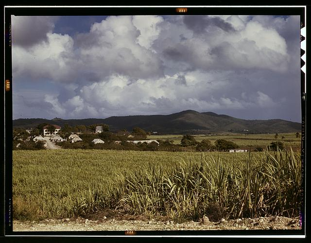 The Virgin Islands, sugar cane country
