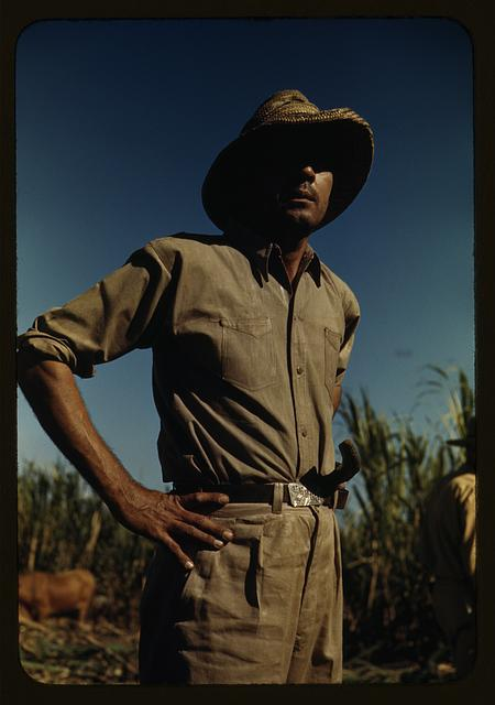 Man in a sugar-cane field during harvest, vicinity of Rio Piedras? Puerto Rico