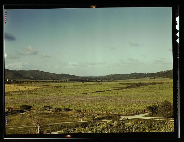 Sugar cane land, Yabucoa Valley? Puerto Rico