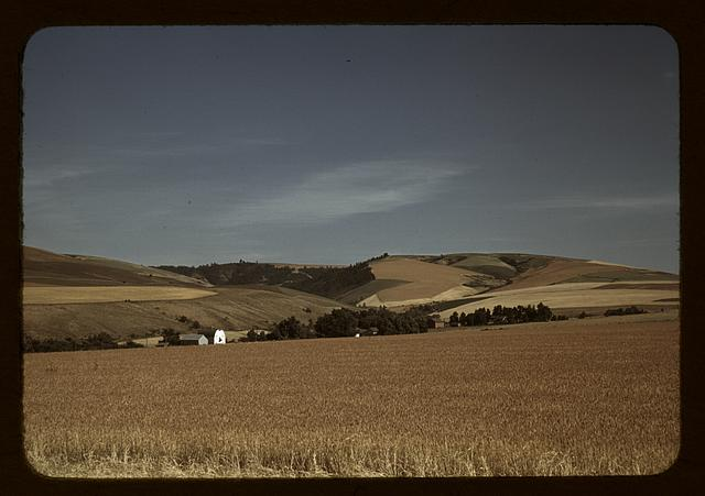 Wheat farm, Walla Walla, Washington