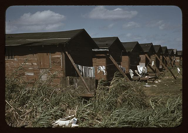 Houses which have been condemned by the Board of Health but are still occupied by Negro migratory workers, Belle Glade, Fla.