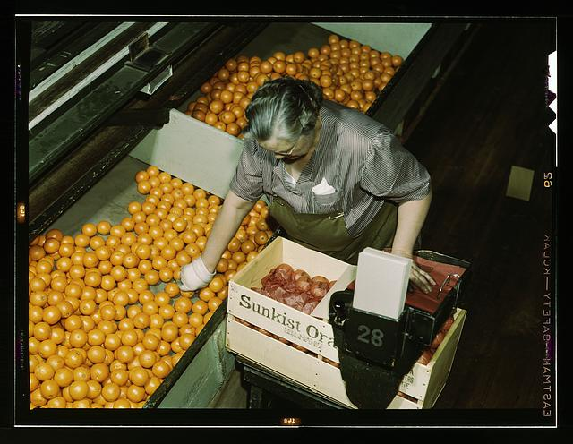 Packing oranges at a co-op orange packing plant, Redlands, Calif. Santa Fe R.R. trip