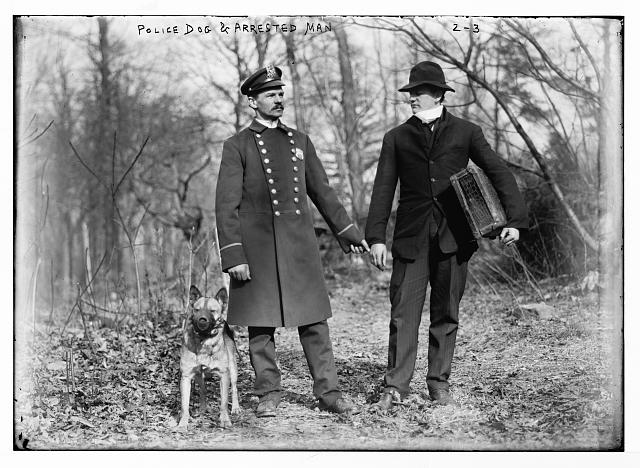Police dogs, policeman, and thief, New York City