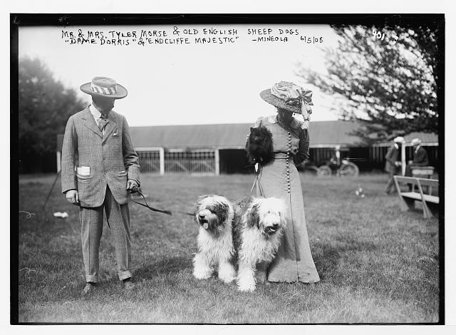 "Mineola Dog Show, Mr. and Mrs. Tyler morse with Old English Sheepdogs, ""Dame Dorris"" and ""Endcliffe"""