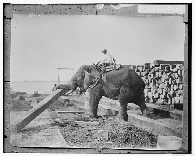 Burmah: elephant working