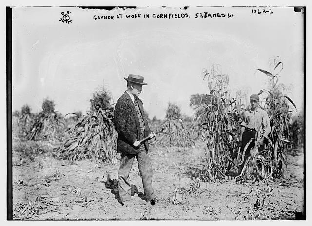 Gaynor holding shovel in cornfields, St. James, L.I.