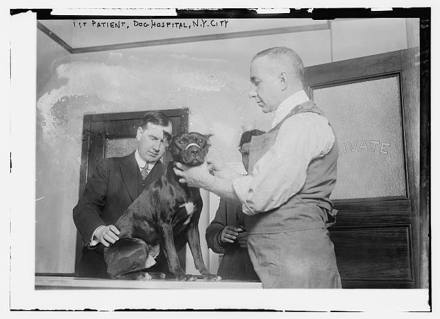 1st patient, Dog Hospital, N.Y. City