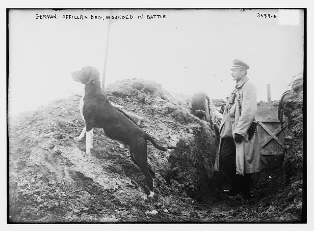 German officer's dog, wounded in battle