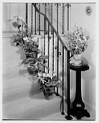 Mrs. Esther Wheeler, book photos at 1506 Woodside Ave., Baldwin, Long Island. Plants on stairs