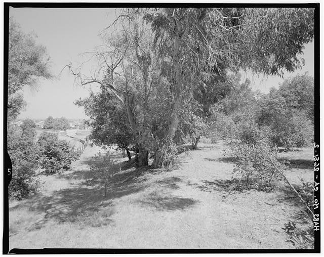 "Contextual view showing northeastern eucalyptus windbreak and portion of citrus orchard.  Camera facing 118"" east-southeast. - Goerlitz House, 9893 Highland Avenue, Rancho Cucamonga, San Bernardino County, CA"