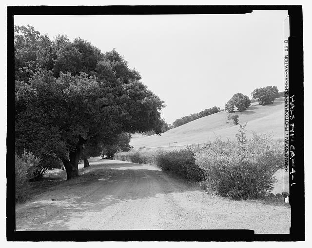 ENTRANCE ROAD LINED BY OAK TREES AND POMEGRANATE HEDGE ON RIGHT.  LOOKING SE. - Olompali State Historic Park, Mary Burdell Garden, U.S. Highway 101, Novato, Marin County, CA