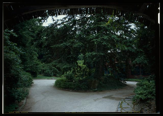 51.  VIEW FROM BENEATH THE ENTRY ARCH LOOKING AT THE CIRCULAR DRIVE.  THE HISTORIC CANADIAN HEMLOCK IS IN THE CENTER BED.  (DUPICATE OF HABS No. MA-1168-16) - Fairsted, 99 Warren Street, Brookline, Norfolk County, MA