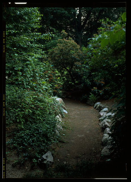 77.  VIEW LOOKING SOUTH ALONG THE ROCK GARDEN PATH, SHOWING THE ROXBURY PUDDINGSTONE EDGING.  (DUPLICATE OF HABS No. MA-1168-48) - Fairsted, 99 Warren Street, Brookline, Norfolk County, MA
