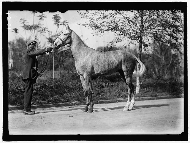 GRAYSON, CARY T., DR., U.S.N. HIS HORSE