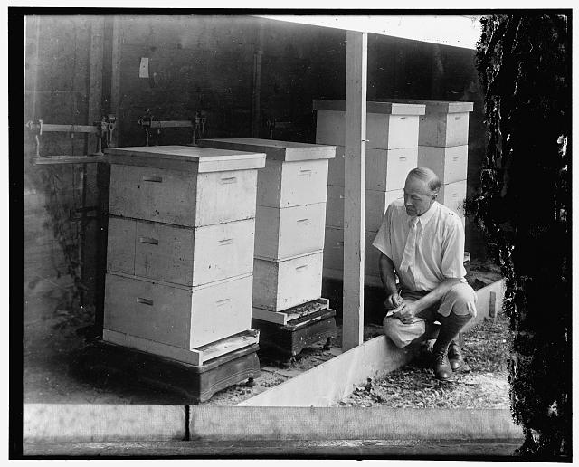 Observing work of the busy bee. E.L. Sechrist, associate agriculturist of the bee culture laboratory, U.S. Department of Agriculture, makes tests of how much work the bees accomplish under different weather conditions be checking the weight of the colonies. During a good honey flow under favorable weather conditions, a colony increases in weight as much as 20 pounds in a single day, 1/20/30