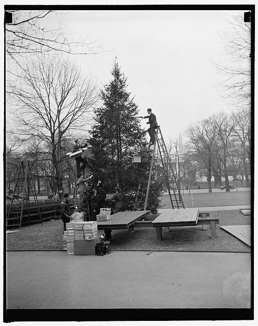 Community Xmas tree decorated. Washington, D.C., Dec. 23. The nation's community Christmas tree just north of the White House being decorated by workmen today in preparation of its lighting by President Roosevelt tomorrow night, 12/23/37