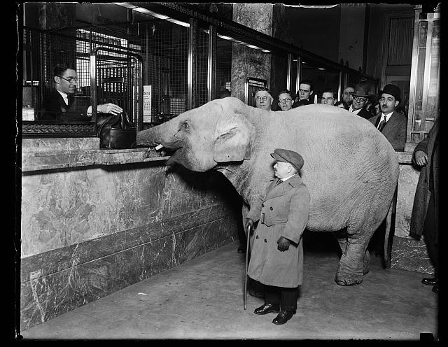 Charlie Becker, midget trainer with Singer's Midgets, walked the smallest elephant of his troupe to Merchant's Bank, and made a deposit for Keith's Theatre. The elephant delivered the money satchel directly to the receiving teller