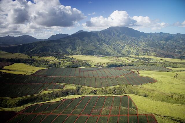Aerial view of pineapple fields, Oahu, Hawaii