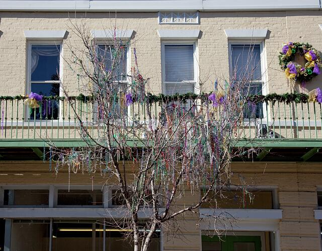 Remnants of Mardi Gras beads hang from a tree on Dauphin Street in Mobile, Alabama